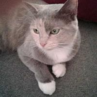 Adopt A Pet :: Catniss - Margate, FL