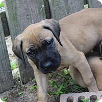 Adopt A Pet :: Jackson- Adoption Pending - Marion, AR