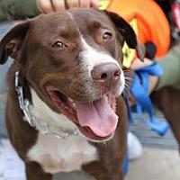 Adopt A Pet :: Oona O'Neill - Brooklyn, NY