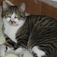 Adopt A Pet :: Max - Washington, VA