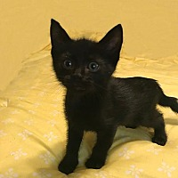 Adopt A Pet :: Myrtle - Little Rock, AR
