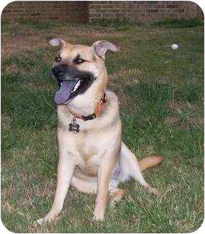 German Shepherd Dog Mix Dog for adoption in White Plains, New York - Gracie