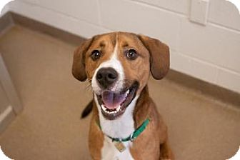 Hound (Unknown Type) Mix Dog for adoption in Novelty, Ohio - Travolta
