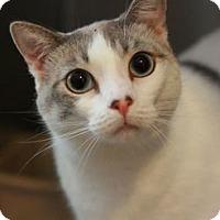 Adopt A Pet :: Miyoshi - Canoga Park, CA