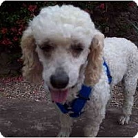 Adopt A Pet :: Adela - Albuquerque, NM