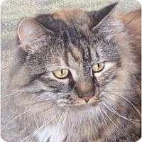 Adopt A Pet :: Little Bit - Andover, KS