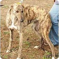 Adopt A Pet :: Tess - Philadelphia, PA