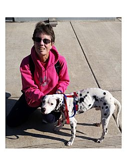 Dalmatian Mix Dog for adoption in Lodi, California - Scooby