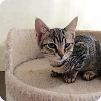 Adopt A Pet :: Carly - Colmar, PA