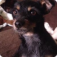 Adopt A Pet :: Kylie - Santa Monica, CA