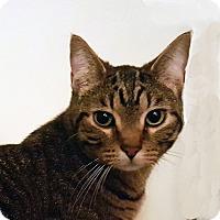 Adopt A Pet :: Boo - Bentonville, AR