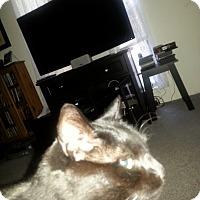 Adopt A Pet :: Poe - Piscataway, NJ
