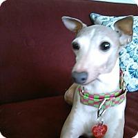 Adopt A Pet :: Phebe - Cumberland, MD