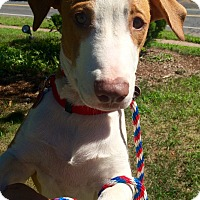 Adopt A Pet :: Chubs in CT - East Hartford, CT