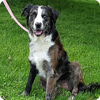 Adopt A Pet :: Quigley - New Oxford, PA
