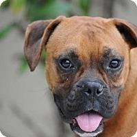 Adopt A Pet :: Glory - Alameda, CA