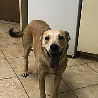 Adopt A Pet :: Girlie - Crestline, CA