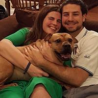 Adopt A Pet :: Zena - FOSTER NEEDED - Wilmington, DE