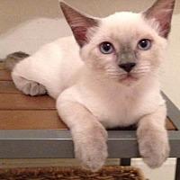 Adopt A Pet :: Agnes - Parlier, CA