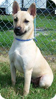 Basenji Mix Dog for adoption in Byhalia, Mississippi - Diesel