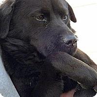 Adopt A Pet :: Grinch - Clinton, ME