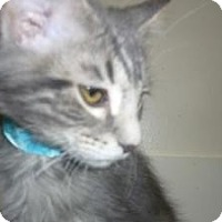 Adopt A Pet :: Thadius - Milwaukee, WI