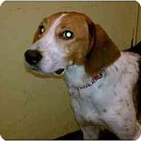 Adopt A Pet :: CC - Alexandria, VA