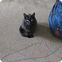 Adopt A Pet :: Binxie - Los Angeles, CA