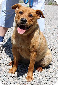 Labrador Retriever Mix Dog for adoption in Pinehurst, North Carolina - Zoe