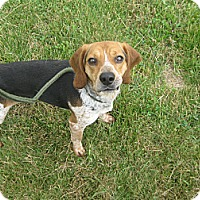 Adopt A Pet :: #256-14  RESCUED! - Zanesville, OH