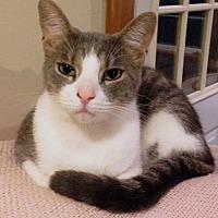 Adopt A Pet :: Luigi - Wayland, MI