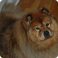 Adopt A Pet :: ANGEL - Dix Hills, NY
