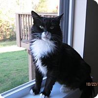 Adopt A Pet :: Terri - Pineville, NC