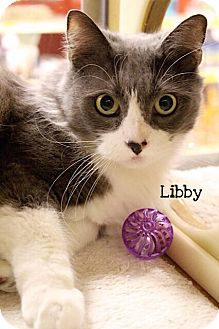 Domestic Mediumhair Cat for adoption in Foothill Ranch, California - Libby