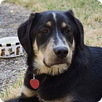 Adopt A Pet :: *Strider - PENDING - Westport, CT