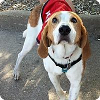Adopt A Pet :: Bostwick - Virginia Beach, VA
