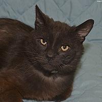 Adopt A Pet :: Phantom - Medina, OH