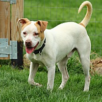 Adopt A Pet :: Frasier - Lafayette, IN
