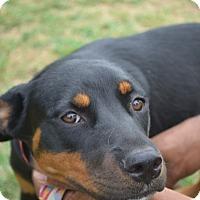 Adopt A Pet :: Britta - Leander, TX