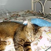 Adopt A Pet :: sassy - grove city, OH