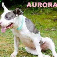 Adopt A Pet :: AURORA - Franklin, NC