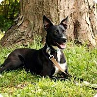 Adopt A Pet :: ELLA - Portland, ME