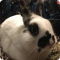 Adopt A Pet :: Parsnip - Woburn, MA