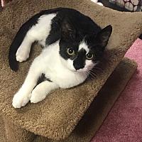 Adopt A Pet :: Stella (tripod) - Media, PA