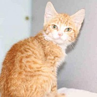 Adopt A Pet :: A456662 - Salt Lake City, UT