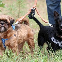 Adopt A Pet :: Bridey and Davy - Bedminster, NJ