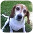 Photo 2 - Beagle Dog for adoption in Portland, Ontario - Oliver