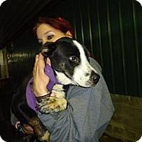 Adopt A Pet :: Skit - Albert Lea, MN