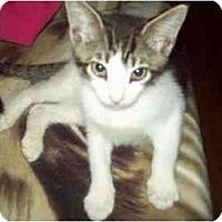 Adopt A Pet :: READY 8-1 - Little Neck, NY