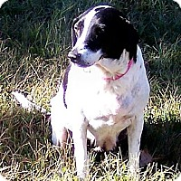Adopt A Pet :: Lillie - Byrdstown, TN